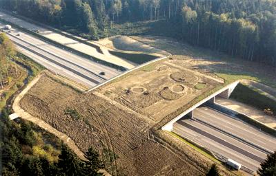 CONSITRANS: Cum influenteaza proiectarea si executia infrastructurii rutiere coridoarele ecologice